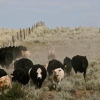 Mannix Brothers Ranch - Helmville, MT