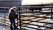 ranchers relief fund heifers for south dakota