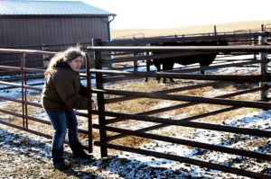 ranchers relief fund heifers for south dakota