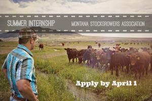 Montana Beef Industry Internship