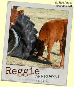 Reggie 13