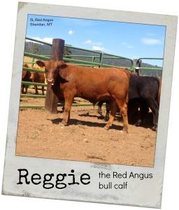 reggie august back-1