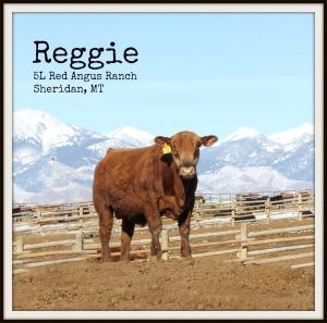 Reggie March 2014-1.jpg