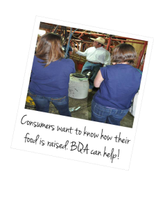 Beef Briefs Consumer Confidence Beef Quality Assurance