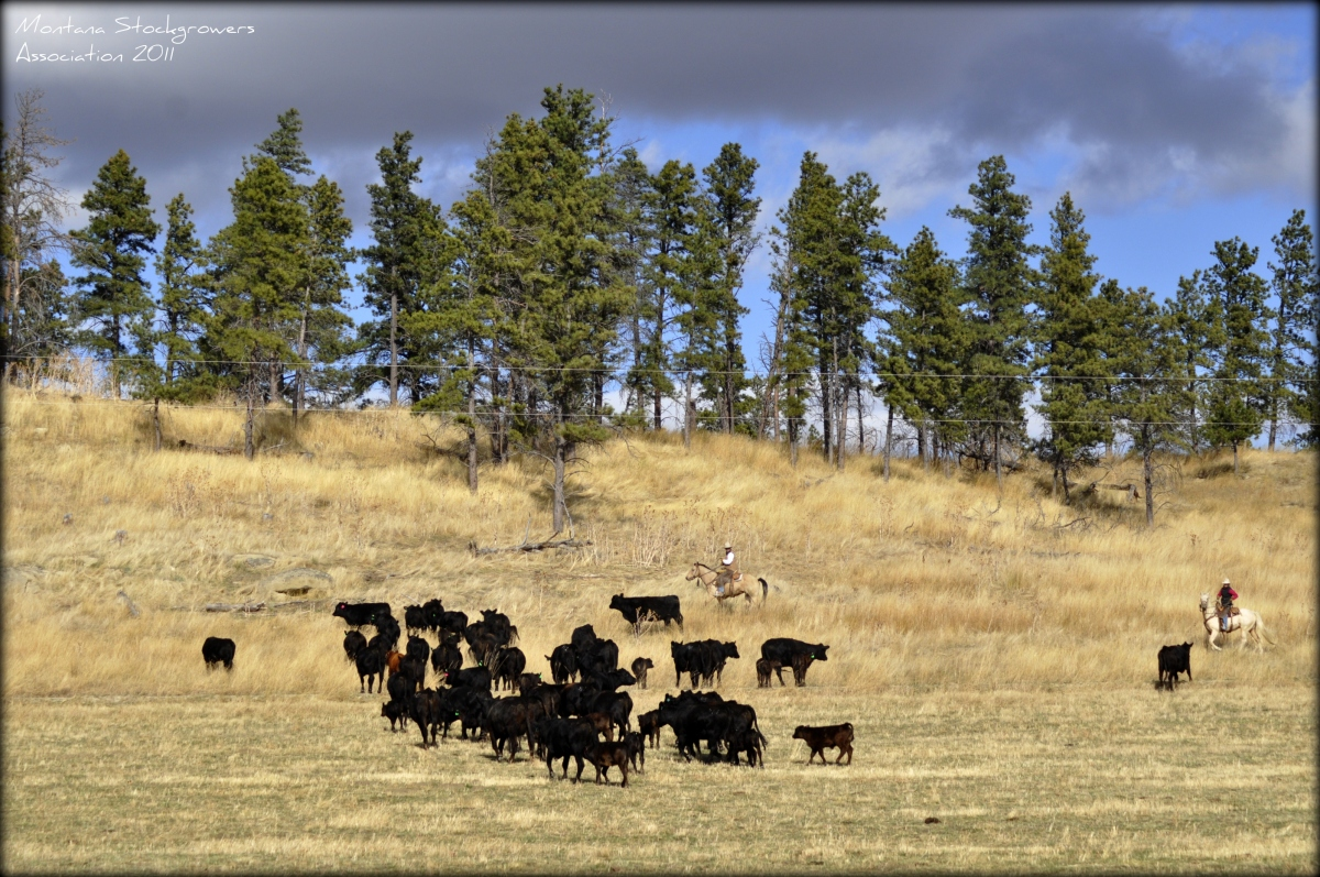 It's Just Ranching - By Scott Wiley