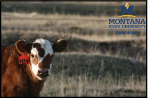 MSU Extension Montana Nutrition Conference and Livestock Forum