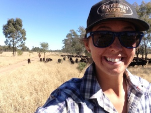 Kelsey in the lead of 500 weaner calves to trail across the river.