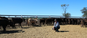 "Kelsey at the backgrounding paddocks with ""re-hydrating"" bullocks in the background."