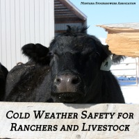 Cold Weather Safety for Ranchers and Livestock | 10 Things to Know