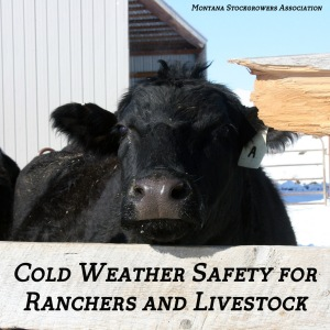 Cold Weather Safety Farm Ranch Livestock